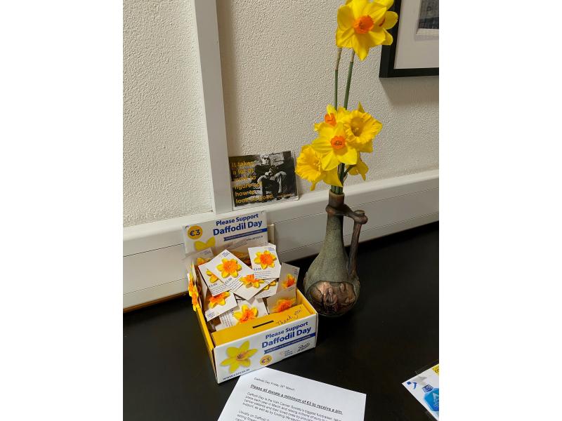 daffodils-pins